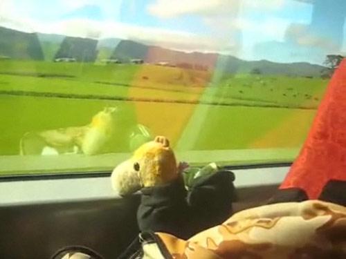 Zugfahrt in Neuseeland